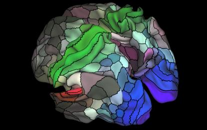 Un nuevo mapa registra áreas desconocidas de la corteza cerebral