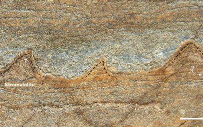 Hallan los fósiles más antiguos conocidos hasta ahora
