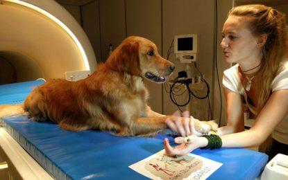 Los perros entienden qué les decimos y cómo se lo decimos