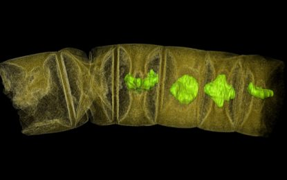 Los fósiles de plantas más antiguos del mundo tienen 1.600 millones de años
